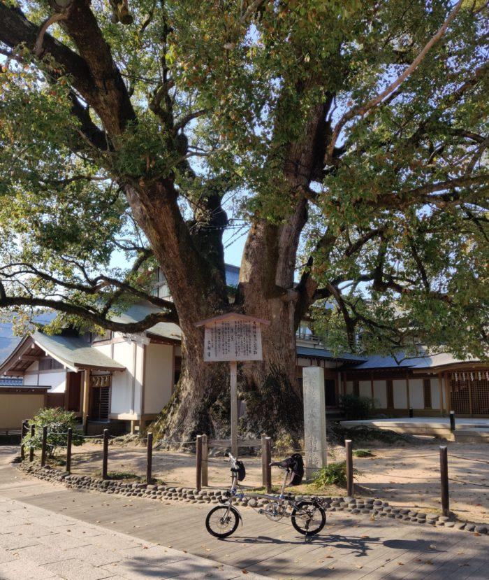 天然記念物 太宰府神社のクスと執事プトン